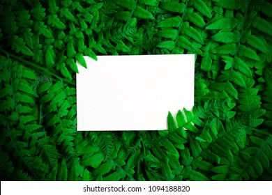 Green polypody fern. Midsummer day background with free space