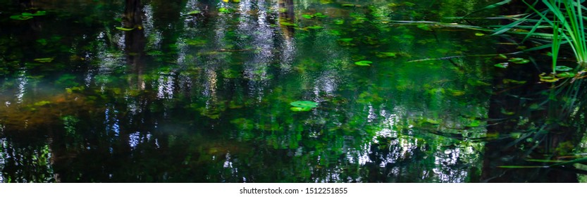 green pond in dark colors. Reflection of the forest in the water. Leaves of water lilies on the surface of the surface of dark water.