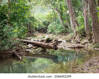 Green pond in tropical rain forest