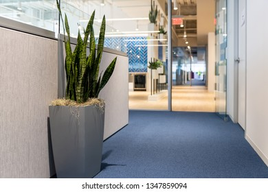 Green potted plant in large vase flowerpot in minimalist corporate office cubicles interior of building and nobody empty space with light exit sign corridor
