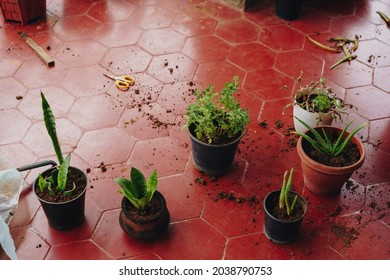 Green potted plants haphazardly kept on red floor, with copy space. Repotting, adding compost in soil, gardening on a balcony, messy environmental photo of house plants