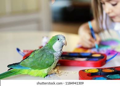 The green quaker parrot is posing on for his owner - beautiful toddler girl who is painting a picture sitting at the table. Pet bird friendship