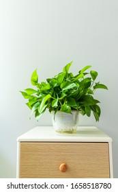Green Radish Bonsai on the tea table - Shutterstock ID 1658518780