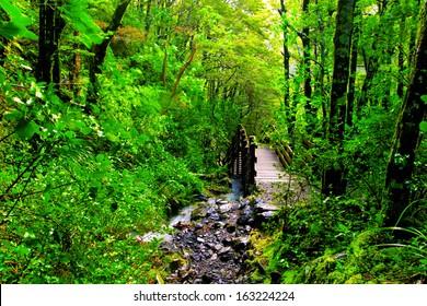 green rainforest path with bridge crossing