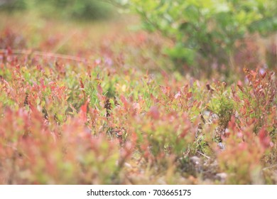 Green and red plants in a pine forest
