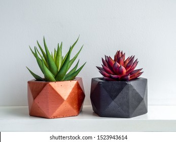 Green and red succulent plant in modern black and copper colors geometric concrete planters on white shelf isolated on white background. Beautiful painted concrete pots.
