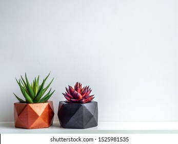 Green and red succulent plant in modern black and copper colors geometric concrete planters on white shelf isolated on white background with copy space. Beautiful painted concrete pots.