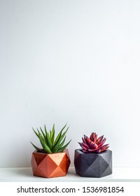 Green and red succulent plant in modern black and copper colors geometric concrete planters on white shelf isolated on white background with copy space. Beautiful painted concrete pots vertical style.