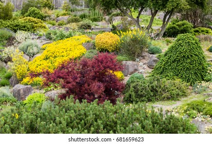 Green Red and Yellow Shrubs in Rock Garden