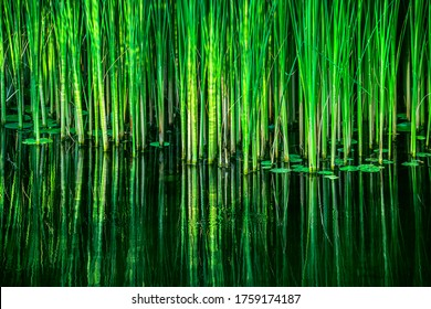Green reed fibers, leaves in the lake, reflections on the water surface. - Shutterstock ID 1759174187