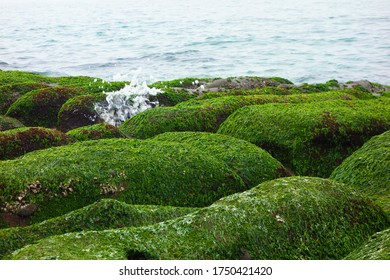 Green Reef at Laomei, Taiwan's North Coast, greenstone trough,Every year between February and May
