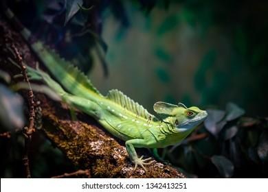 Green reptile in Frankfurt Zoo