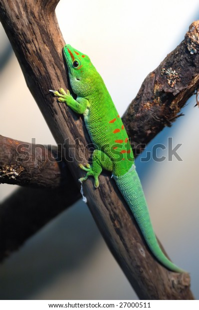 green reptile lying on a branch in terrarium in Moscow zoo in Russia