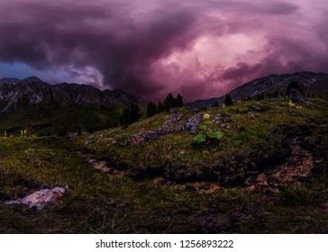 green rhubarb plant in the mountains against the backdrop of purple clouds at sunset. Panorama