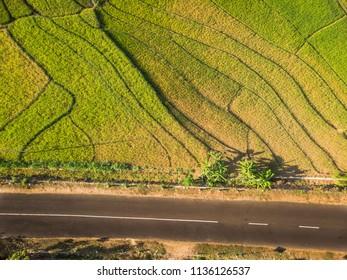 Green rice field aerial photography, Location: Yogyakarta, Indonesia - 15 July 2018