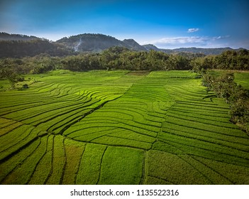 Green rice field aerial shot; Yogyakarta, Indonesia - 15 July 2018