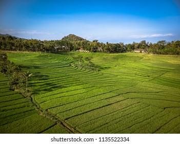Green rice field aerial shot; Yogyakarta, Indonesia - 15 July 2018