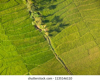 Green rice field aerial top view; Yogyakarta, Indonesia - 15 July 2018