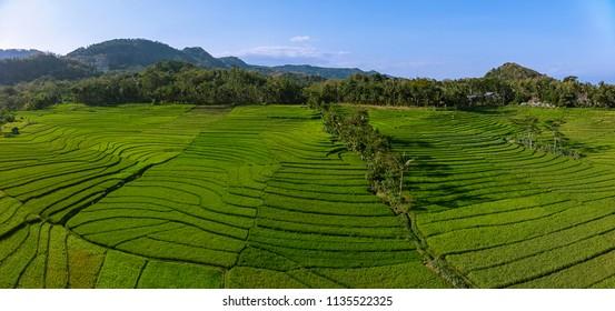 Green rice field aerial view in Kulonprogo village, Yogyakarta, Indonesia - 15 July 2018