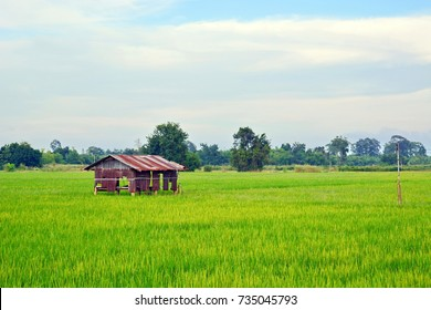 Green rice field and cottage in Thailand