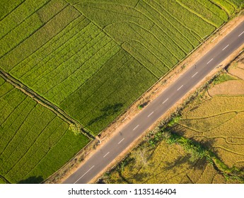 Green rice field  and country road in aerial photography top view; Yogyakarta, Indonesia - 15 July 2018