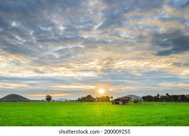 Green Rice field with the hut and more clouds  in morning and evening time