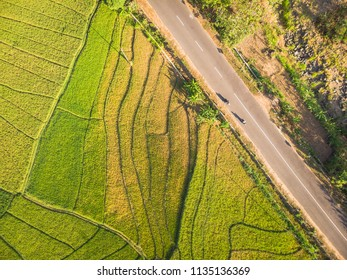 Green rice field with line pattern and cross country road in Aerial Photography top view; Yogyakarta, Indonesia - 15 July 2018