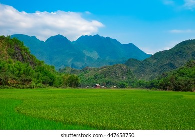 Green rice field and mountains, Mai Chau Valley, Vietnam, Southeast Asia