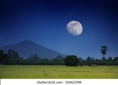 The green rice field at night with the moonlight.