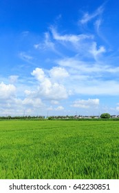 Green rice fields and blue sky in the countryside