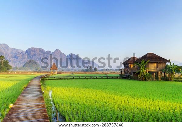 Les rizières vertes et les montagnes, Vang Vieng, Laos