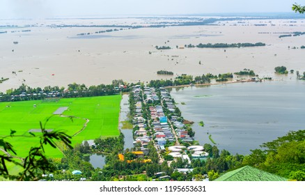 Green rice fields in rural Vietnam in the flood season rise from beautiful view. This is the largest granary Mekong Delta and the pride of Vietnam's agriculture