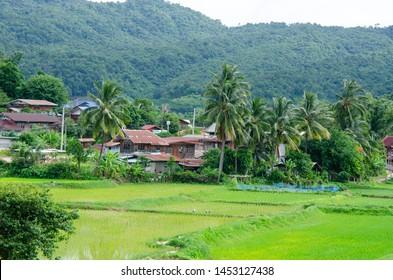 Green rice filde in Amphoe Na Haeo loei Thailand.