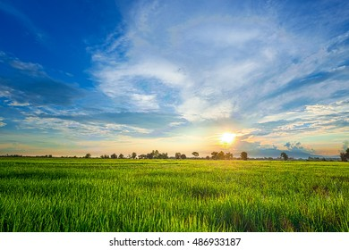Green rice paddy fields with sky, cloud,  sunrise or sunflare and mountain background.Beautiful green rice with water drop.