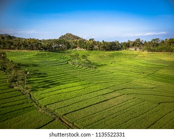 Green rice terrace field landscape with line pattern and blue sky in aerial photography shot; Yogyakarta, Indonesia - 15 July 2018