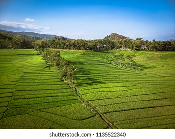 Green rice terrace field landscape with line pattern in aerial photography shot; Yogyakarta, Indonesia - 15 July 2018
