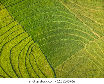 Green rice terrace field in tropical countryside with line pattern aerial photography top view; Yogyakarta, Indonesia - 15 July 2018