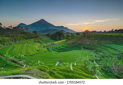 green rice terraces in Trawas, Mojokerto - East Java, Indonesia. the view of the green rice field sunrise against the backdrop of Mount Penanggungan - Shutterstock ID 1705184572