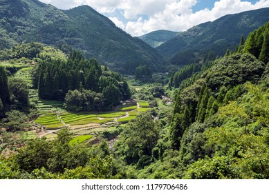 Green rice terracess of mountainous region with green forest in Kumamoto