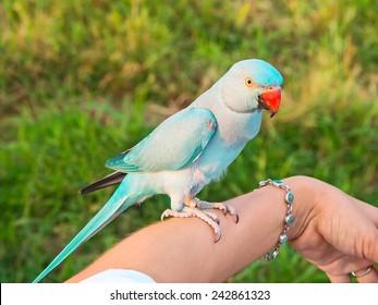 Moustached Parakeet Images, Stock Photos & Vectors | Shutterstock