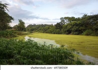 green river in Mlilwane wildlife sanctuary park, in swaziland