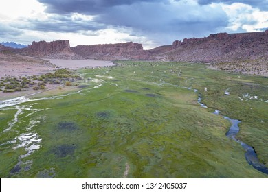Green River Valley with Llamas and Alpacas in the Altiplano near Uyuni, Potosi, Bolivia. Aerial Drone Scene.