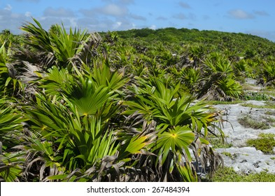 Green rocky hill covered with small palm trees