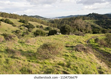 Green Rolling Hills in Marin County