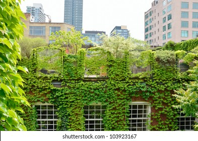 Green Roof garden in urban setting