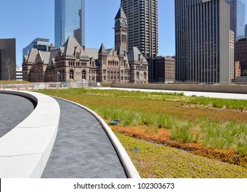 green roof on urban building with Old City Hall, Toronto