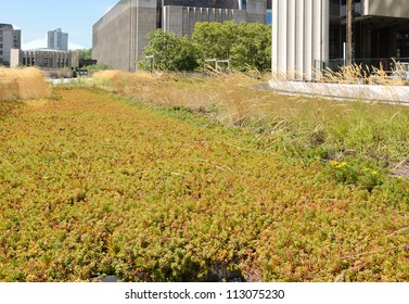 green roof on urban building