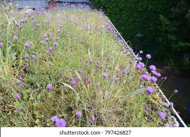 green roof with sedum herbs: work of a german roofing company 2015, professional roof greening