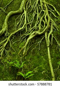 Green roots growing over rock
