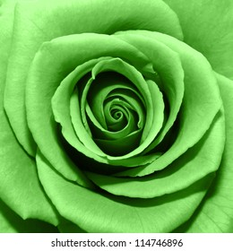 Green Rose High Res Stock Images Shutterstock